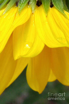 Photograph - Rain And Sunshine On A Colorado Wildflower by Arizona  Lowe