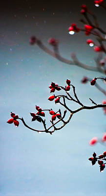 Photograph - Rain Bokeh At Christmas Time by Shelby Young