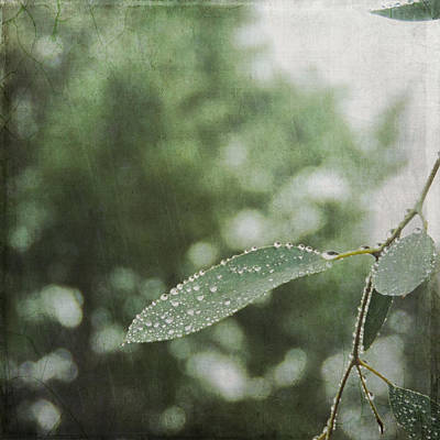 Photograph - Rain Bokeh by Sally Banfill