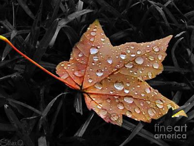 Photograph - Rain Catcher by September  Stone