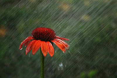 Rain Art Print by Darren Fisher