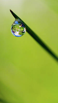 Photograph - Rain Drop Reflection by Crystal Wightman