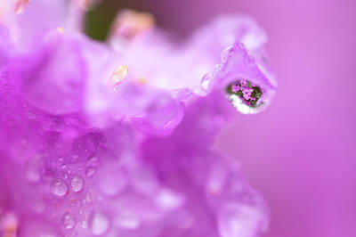 Photograph - Rain Drop Refractions by Brian Hale