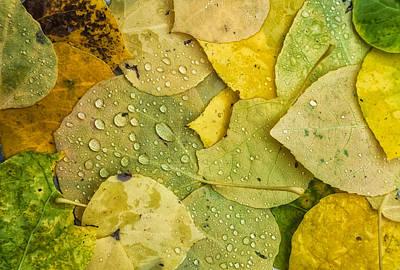 Photograph - Rain Drops 2 by Jonathan Nguyen