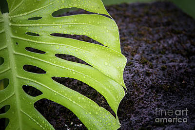 Photograph - Rain Drops 3 by Daniel Knighton