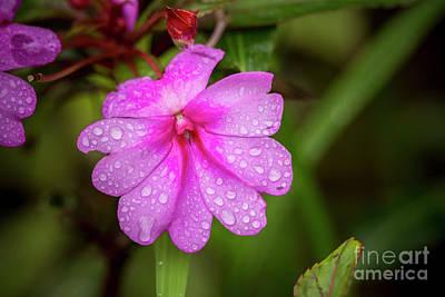 Photograph - Rain Drops 4 by Daniel Knighton