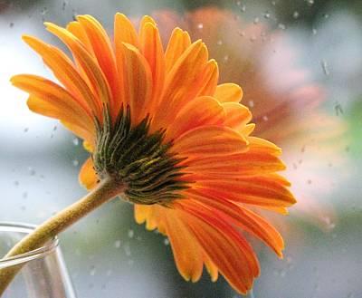 Photograph - Rain Drops At My Window by Angela Davies