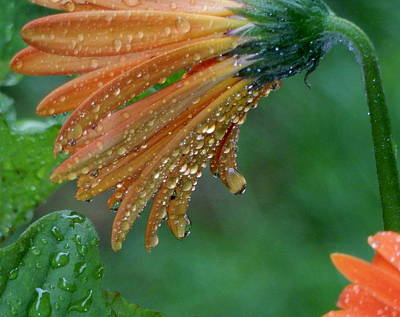 Photograph - Rain Drops by Betty-Anne McDonald