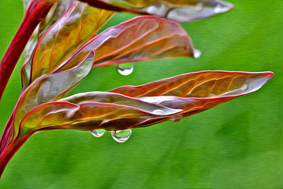 Photograph - Rain Drops by James Steele