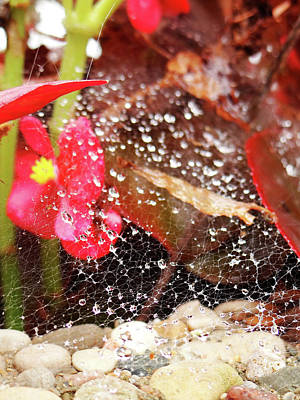 Photograph - Rain Drops by Jamie Johnson