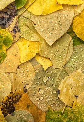Photograph - Rain Drops by Jonathan Nguyen