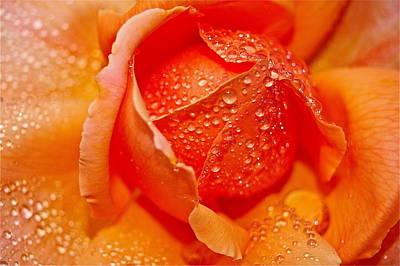 Rain Drops Art Print by Mark Lemon