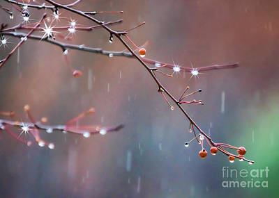 Photograph - Rain Drops On Berries by Janice Rae Pariza