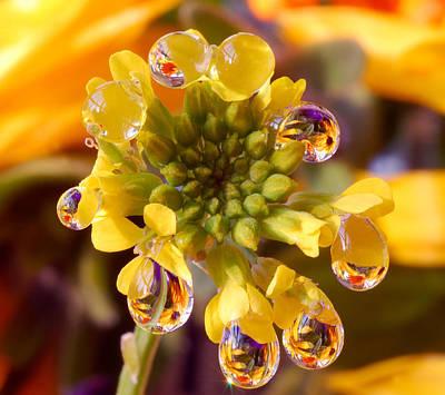 Rain Drops On  Flower Original