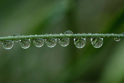Photograph - Rain Drops On Grass by Robert Potts