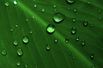 Photograph - Rain Drops On Green Leaf Macro 2 by Jenny Rainbow