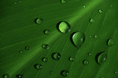 Photograph - Rain Drops On Green Leaf Macro by Jenny Rainbow