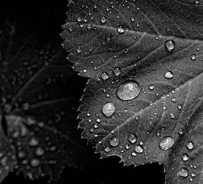 Rain Drops On Leaf Art Print by Robert Ullmann