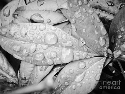 Photograph - Rain Drops by Robin Coaker