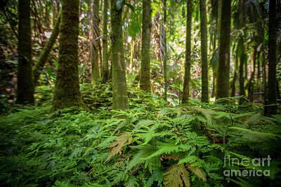 Photograph - Rain Forest 1 by Daniel Knighton