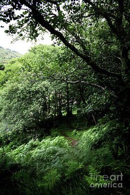 Photograph - Rain Forest by Doc Braham