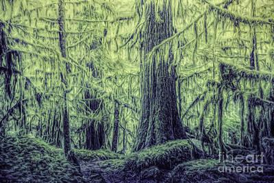Photograph - Olympic Rain Forest by Jean OKeeffe Macro Abundance Art