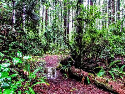 Photograph - Rain Forest by Marilyn Diaz