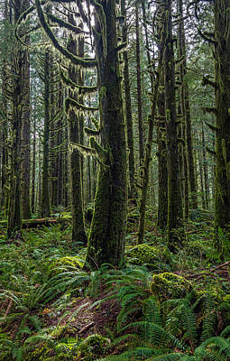 Photograph - Rain Forest Of Golden Ears by Pierre Leclerc Photography