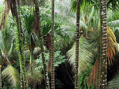 Rain Forest Palau Art Print