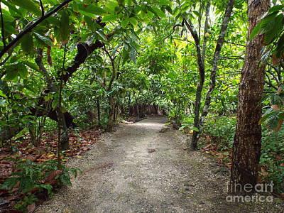 Photograph - Rain Forest Road by Barbara Von Pagel