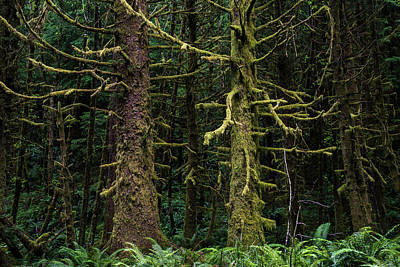 Photograph - Rain Forest by Robert Potts