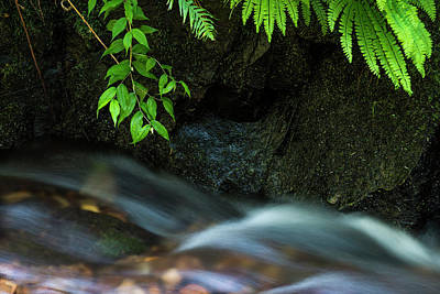 Photograph - Rain Forest Stream by Robert Potts