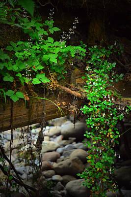 Photograph - Rain Forest Walk by Theresa Pausch