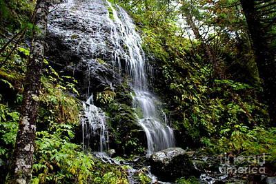 Photograph - Rain Forest Water Fall 2 by Lennie Malvone