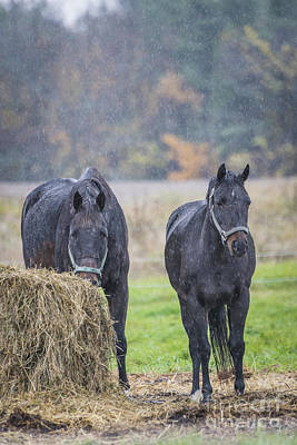 Photograph - Rain Horses by Joann Long
