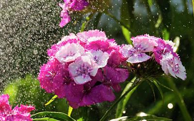 Photograph - Rain In The Garden by Tamara Sushko