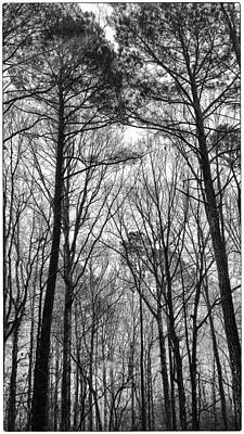 Photograph - Rain In The Pines by Jim Moore