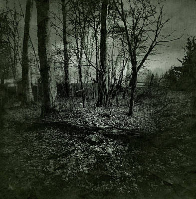 Photograph - Rain In The Trees by Susan Maxwell Schmidt