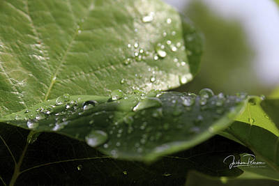 Photograph - Rain by Jackson Pearson