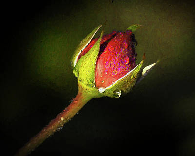 Photograph - Rain Kissed Rosebud by Jerry Gammon