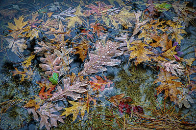Photograph - Rain On Autumn Leaves by Lilia D