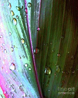 Photograph - Rain On Rainbow Leaf by Barbie Corbett-Newmin