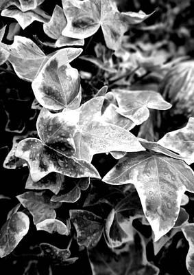 Black Photograph - Rain On The Vine  - Photograph by Katrina Britt