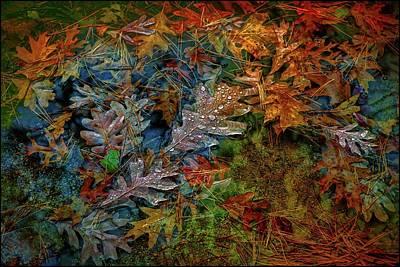 Photograph - Rain Over Autumn Leaves by Lilia D
