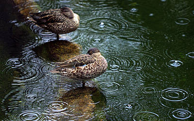 Photograph - Rain Rain Go Away by Joseph Skompski