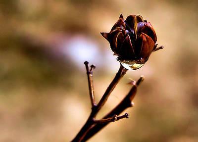 Winter Wedding Flowers Photograph - Rain Soaked by Karen Scovill