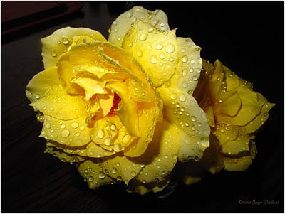 Print featuring the photograph Rain Soaked Yellow Rose by Joyce Dickens