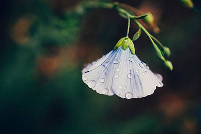 Flower Photograph - Rain Tickled by Tracy  Jade