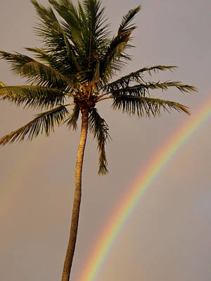 Photograph - Rainbow And Palm Tree by Roger Mullenhour