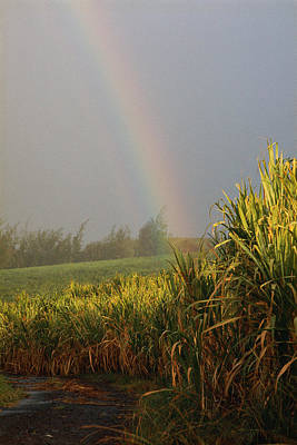 Hawaii Islands Photograph - Rainbow Arching Into Field Behind Stream by Stockbyte